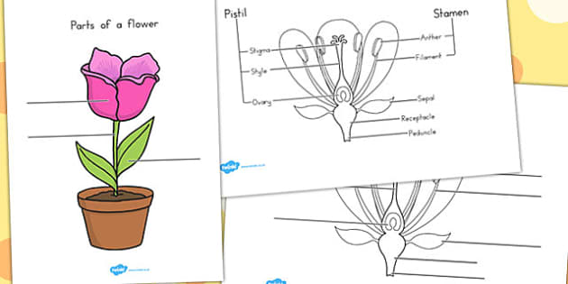 Parts of a Plant and Flower Labelling Worksheet - Australia
