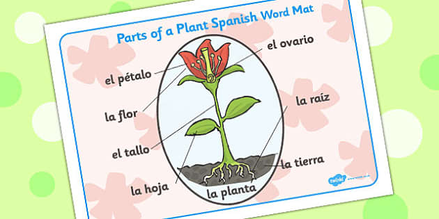 Parts of a Plant Word Mat Spanish - Plant, Parts, Spanish, Word