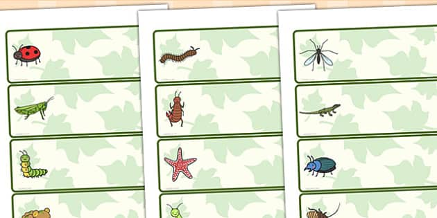 Minibeasts Editable Drawer Peg Name Labels - name tags, signs