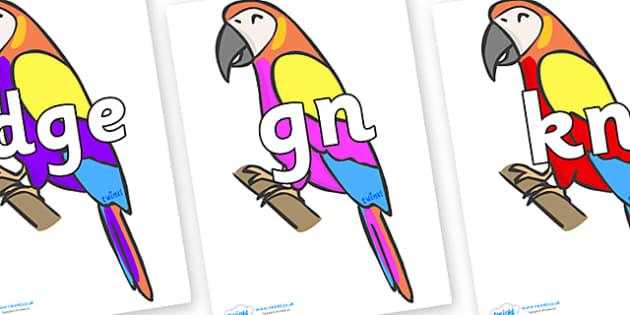Silent Letters on Macaws - Silent Letters, silent letter, letter blend, consonant, consonants, digraph, trigraph, A-Z letters, literacy, alphabet, letters, alternative sounds