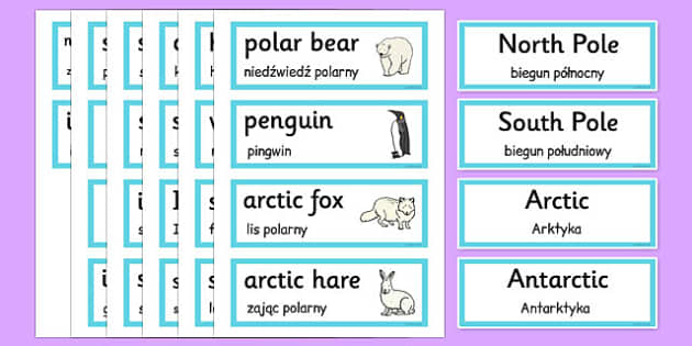 Polar Regions Word Cards Polish Translation - polish, polar regions, word cards, word, cards, polar, regions