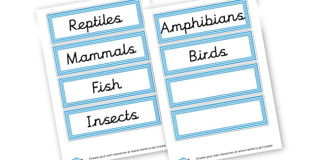 Animal Groups - Primary Resources English, Literacy, Letters and Sounds, phonics