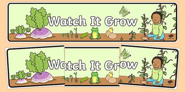 Watch It Grow Display Banner - australia, Australian Curriculum, Watch it Grow, science, year 2, banner, wall display