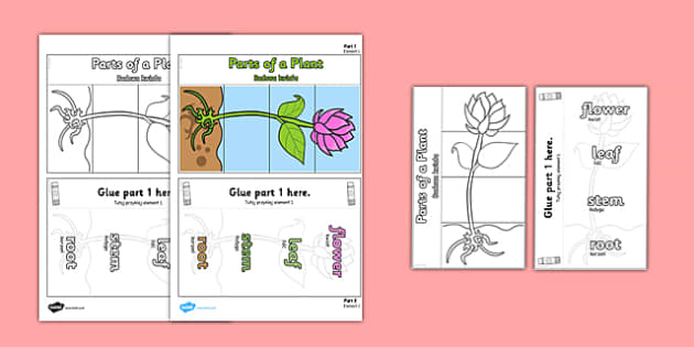 Parts of a Plant Foldable Interactive Visual Aid Template Polish Translation - display, working, wall, craft, nature, science, growth