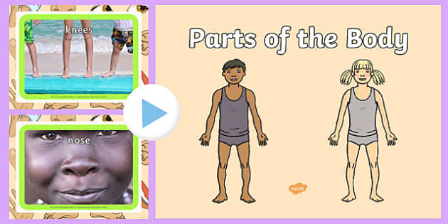 Parts of the Body PowerPoint - parts, body, powerpoint, human