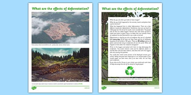Rainforest Deforestation Persuasive Writing Information Sheet - CfE, Social Studies, place, environment, logging
