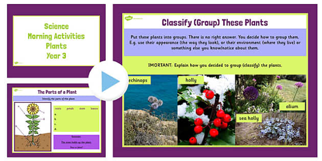 Year 3 Early Morning Activities Plants - science, activities