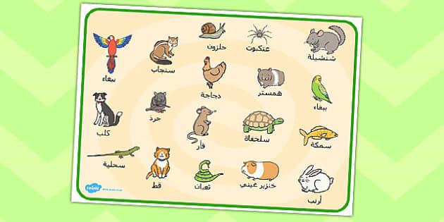بساط كلمات عن حيوانات أليفة عربي