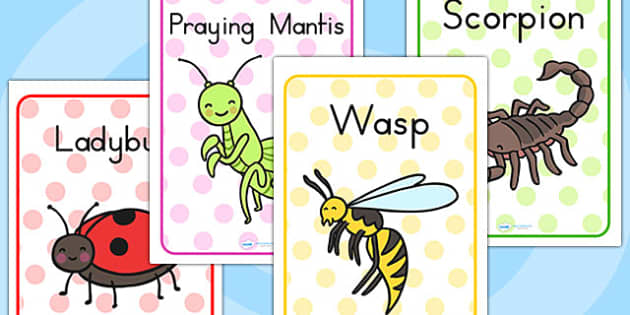 Minibeasts Cute Display Posters - minibeasts display, poster