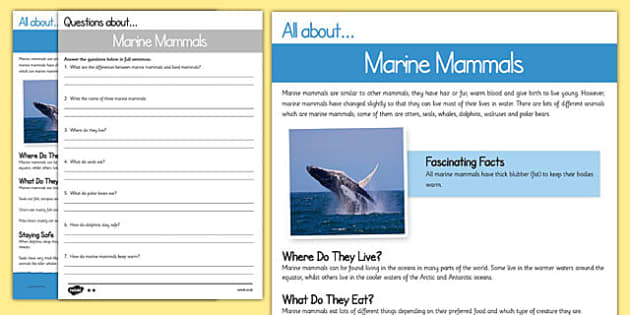 Marine Mammals Differentiated Comprehension Activity Sheet Pack, worksheet