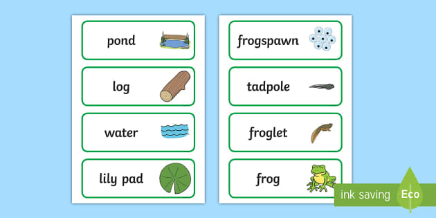 Life Cycle of a Frog Display Photos - Frog, life cycle, lifecycle,Word cards, Word Card, flashcard, flashcards, Frogspawn, Tadpole, Froglet, Frog, Minibeasts, Topic, Foundation stage, knowledge and understanding of the world, investigation, living th