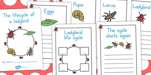 Ladybird Life Cycle Workbook - life cycles, lifecycle, worksheets
