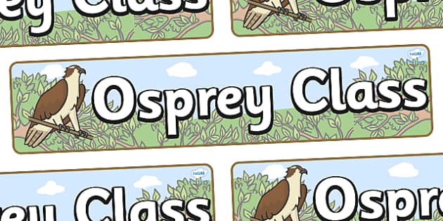 Osprey Themed Classroom Display Banner - Themed banner, banner, display banner, Classroom labels, Area labels, Poster, Display, Areas
