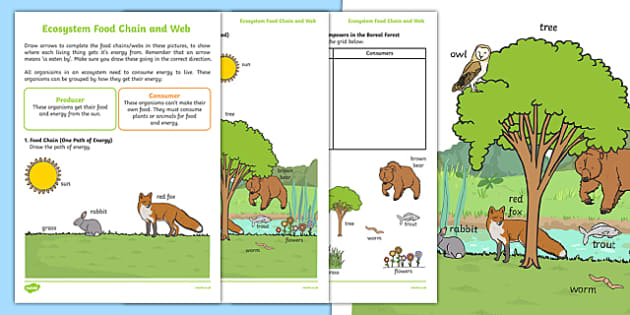 Ecosystem Food Chain and Web Activity Sheets, worksheet