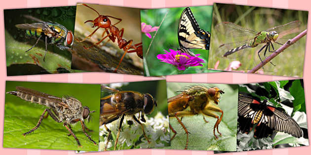 Insects Photopack - insects, photopack, minibeast, art, photos