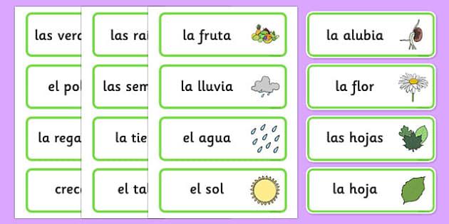 Tarjetas de vocabulario del crecimiento - plantas, crecer, flores, ciencias, arboles