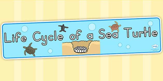 Sea Turtle Life Cycle Display Banner - life cycles, display