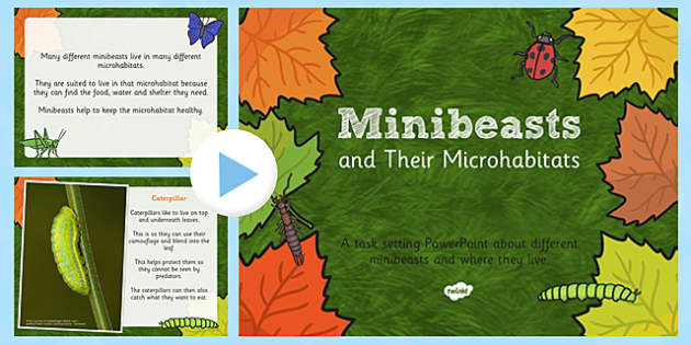 Minibeasts and their Microhabitats PowerPoint - minibeasts