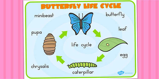 Butterfly Lifecycle Word Mat - life cycles, visual aid, key words