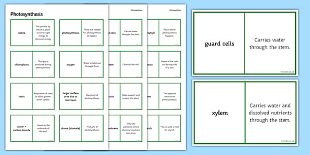 Photosynthesis Loop Cards