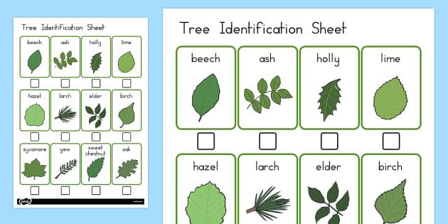 Tree Identification Sheet - australia, tree identification, sheet