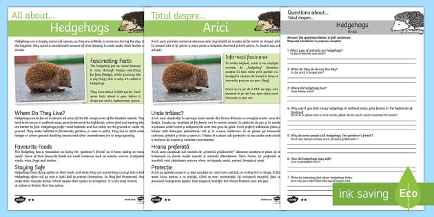 Hedgehogs Reading Comprehension Pack English/Romanian
