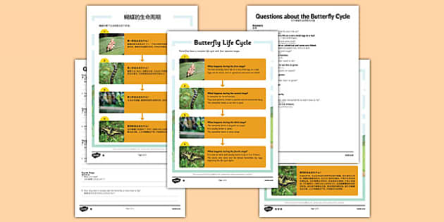 Butterfly Life Cycle Differentiated Reading Comprehension Activity Mandarin Chinese Translation - mandarin chinese, KS1 reading, year 2, y2, comprehension, questions, butterfly, butterflies, life cycle