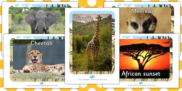 Safari Animal Display Photo Cut-Outs - jungle, animals, display