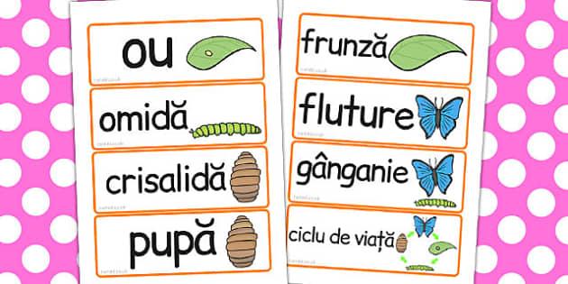 Ciclul de viață la fluture - Cartonașe cu imagini și cuvinte