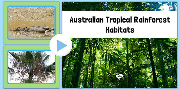 Australian Tropical Rainforest Habitat Photo PowerPoint - australia, Science, Habitats, Australian Curriculum, Tropical, Rainforest, Living, Living Adventure, Good to Grow, Ready Set Grow, Life on Earth, Environment, Living Things, Animals, Plants, P
