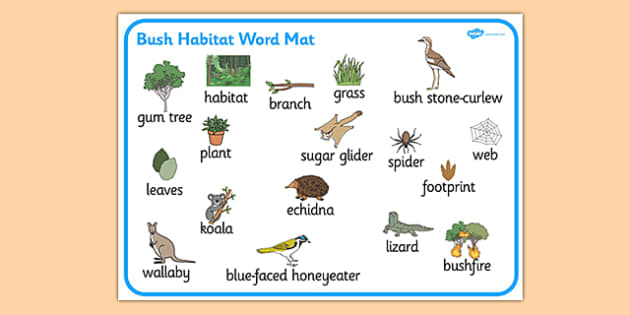 Bush Habitat Word Mat - australia, Science, Year 1, Habitats, Australian Curriculum, Bush, Living, Living Adventure, Environment, Living Things, Animals, Plants, Word Mat