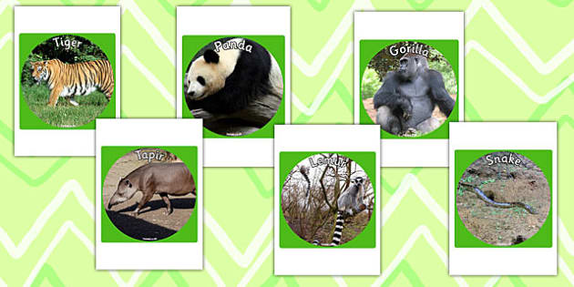 Jungle and Rainforest Display Photo Cut Outs - jungle, rainforest