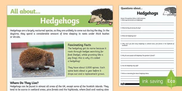 Hedgehogs Reading Comprehension - hedgehog, reading