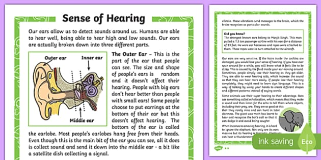 Sense of Hearing Differentiated Fact File