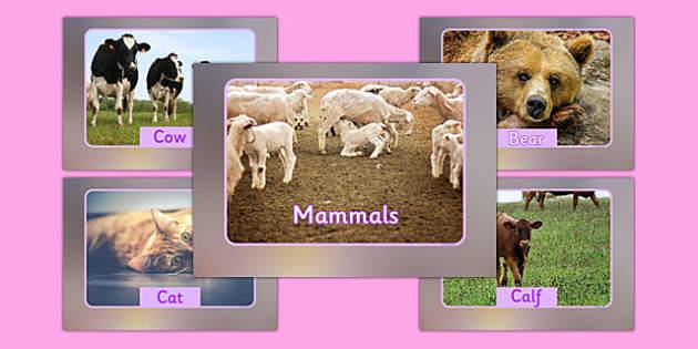 Mammals Display Photos - vocabulary, display, photos, mammals, animals
