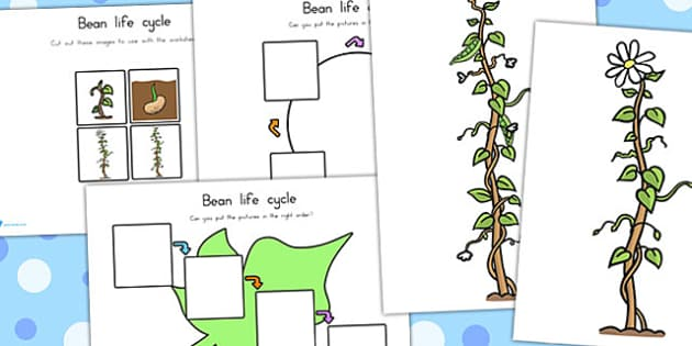 Bean Growth Posters - Australia, Bean, Growth, Growing, Posters