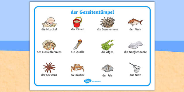 der Gezeitentümpel Seaside Rock Pool Word Mat German - german, seaside, beach, seaside word mat, rockpool word mat, rock pool word mat, seaside key words, seaside words, beach words