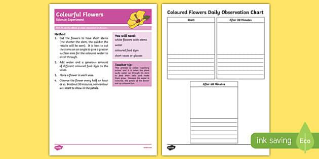 Colourful Flowers Science Experiment-Australia