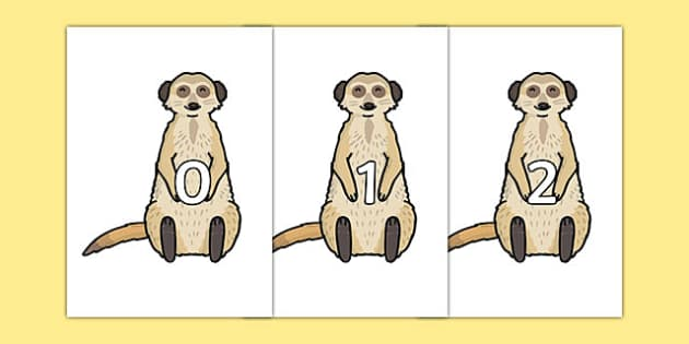 Numbers 0-31 on Meerkats - numbers, 0-31, meerkats, display, posters