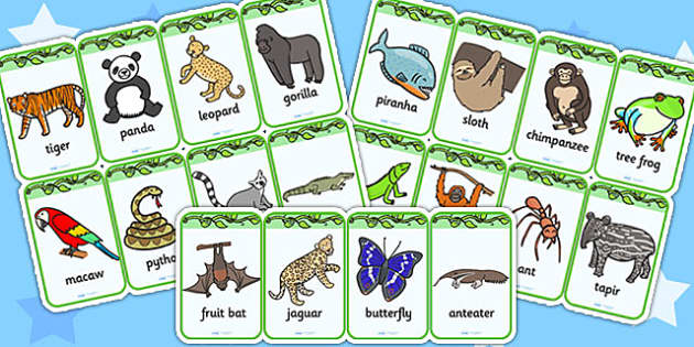 Jungle Flashcards - jungle, animal, geography, flash cards, cards