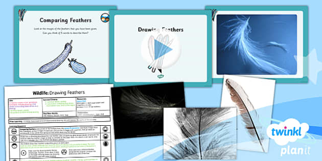 PlanIt - Art UKS2 - Wildlife Lesson 1: Drawing Feathers Lesson Pack