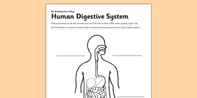 Human Digestive System Activity Sheet - digestion, digestive system, human, label, worksheet