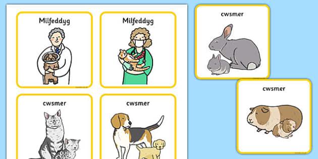 Bathodynnau 'Milfeddygfa' - welsh, cymraeg, bathodyn, milfeddygfa, milfeddyg, badge