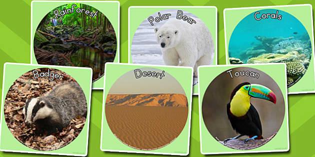 Animal Habitats Display Photo Cut-outs - australia, animal, habitat