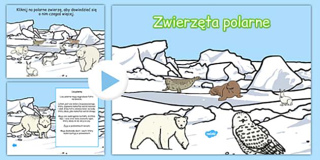 Prezentacja PowerPoint Zwierzęta polarne po polsku - zima