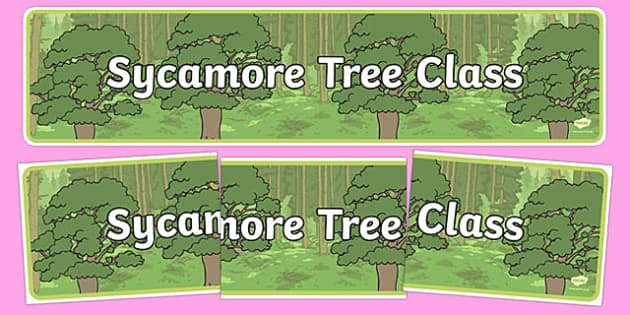 Sycamore Themed Classroom Display Banner - Themed banner, banner, display banner, Classroom labels, Area labels, Poster, Display, Areas