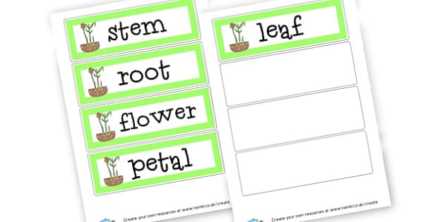 Parts of a Plant Cards - Plants & Growth Primary Resources, flowers, grow, planting, garden