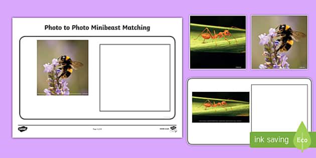 Workstation Pack: Photo to Photo Minibeast Matching Activity