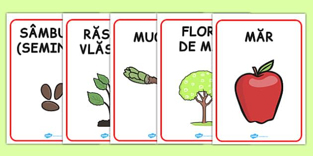 Dezvoltarea plantelor, Plansa - plante, crestere, stiinte