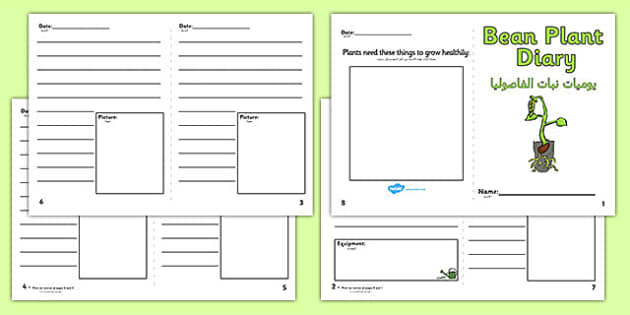 Bean Plant Diary Writing Frame Arabic Translation - EAL, translated, bilingual, grow, beanstalk, science, nature